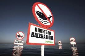 greenpeaceCetacei